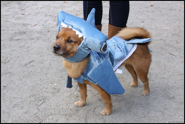 Pooches show off their costumes at Halloween Dog Parade