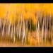 An Autumn Impression by Garrett Costanzo Photo