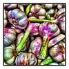 #garlic #variation #weeklymarket
