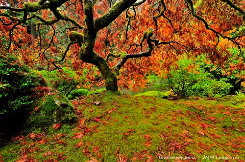 autumn color leaves rock stone oregon portland japanesegarden moss maple