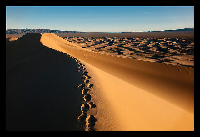 the sand dunes of Khongoryn Els at sunset in the Gobi Desert of  Mongolia