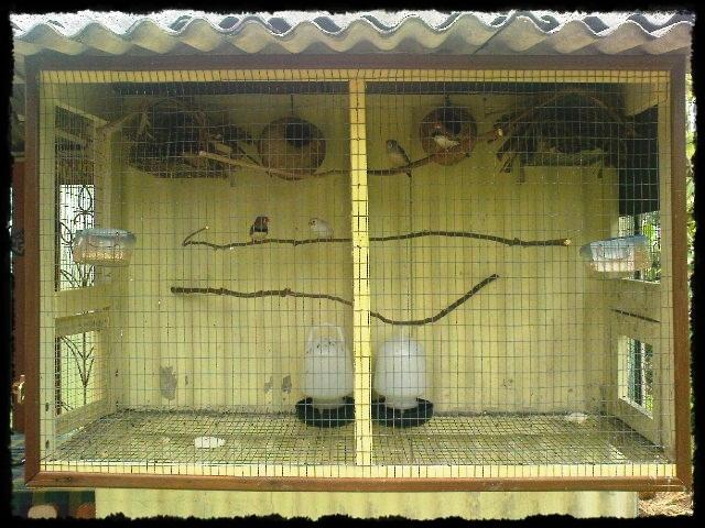 Zebra Finches Cage