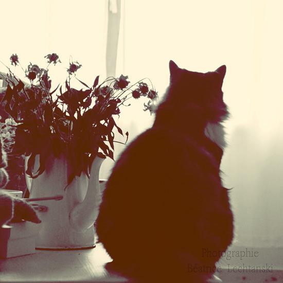Un chat sur une table à côté d'un bouquet...