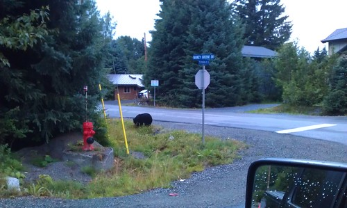 A Bear at our Riders Lodge