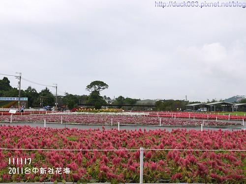 P1130295花海