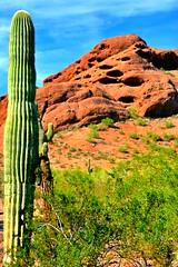 Saguaro and Papago