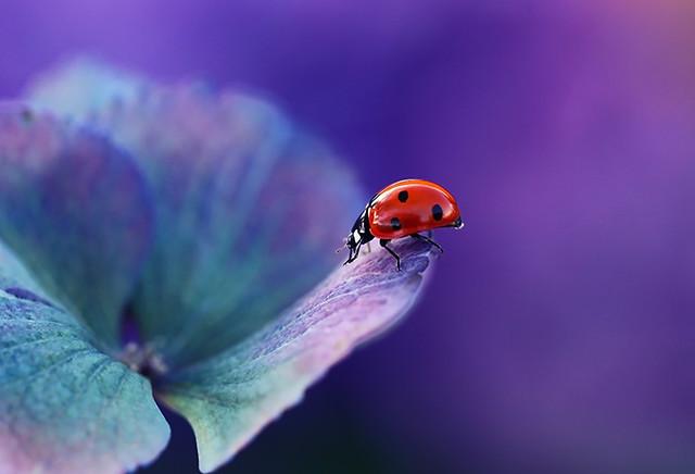 Ladybird........