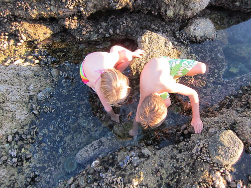 In the tide pools