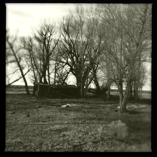 cameraphone trees abandoned fence colorado shed sanluisvalley co slv iphone southerncolorado bythesideoftheroad pammorris pamspics hipsta appleiphone iphone4 mobilephonephotography hipstamatic