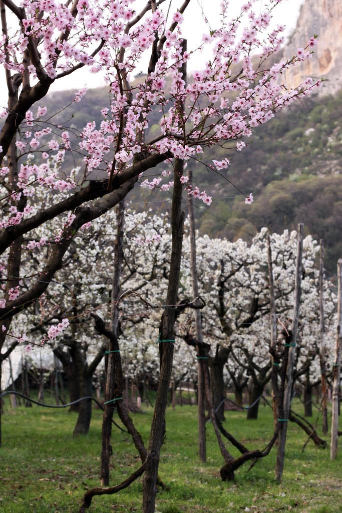 lumignano spring4