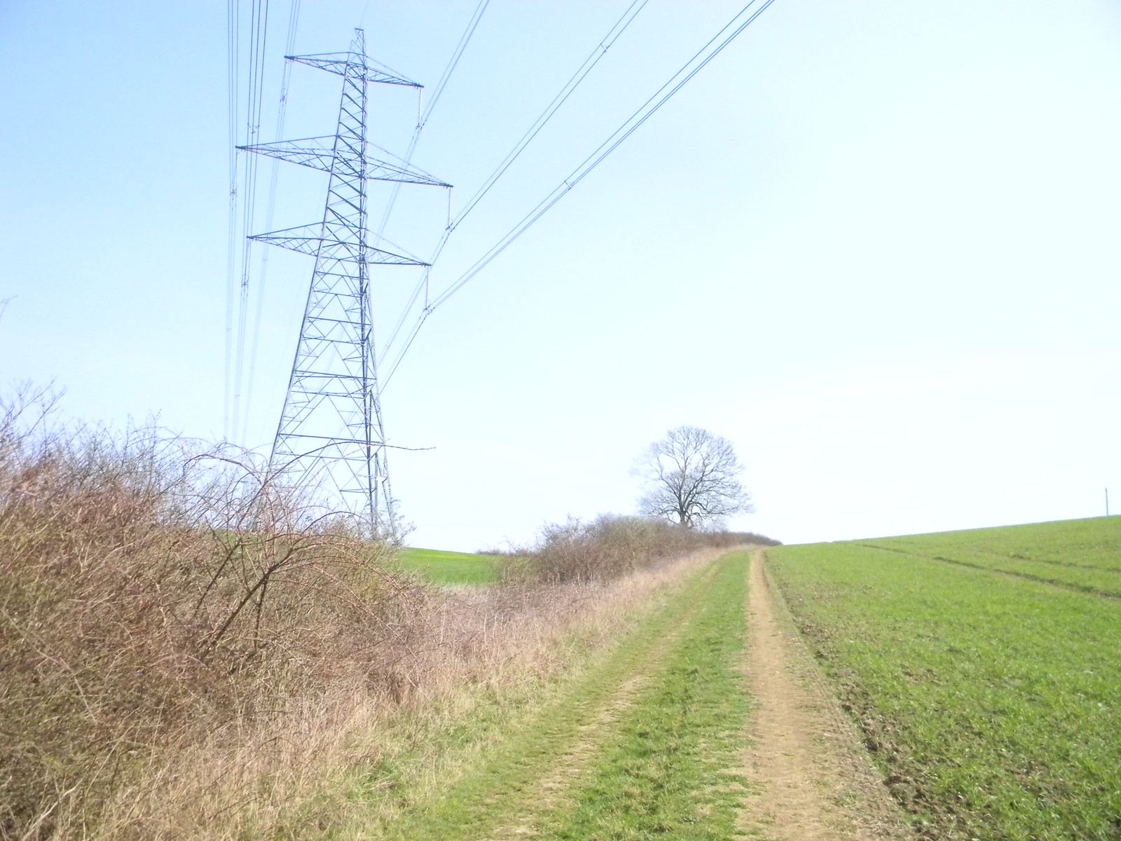 A pylon crosses Luckily, it didn't see me. Great Chesterford to Newport