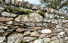wall HyLl