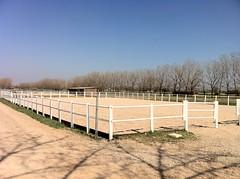 Campo scuola equitazione di m 40 x 25