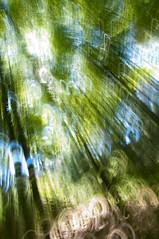 Impression, Bamboo Forest - Cuarta