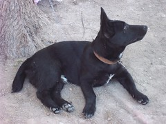 Mexican dog