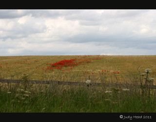 Poppies In The Corn