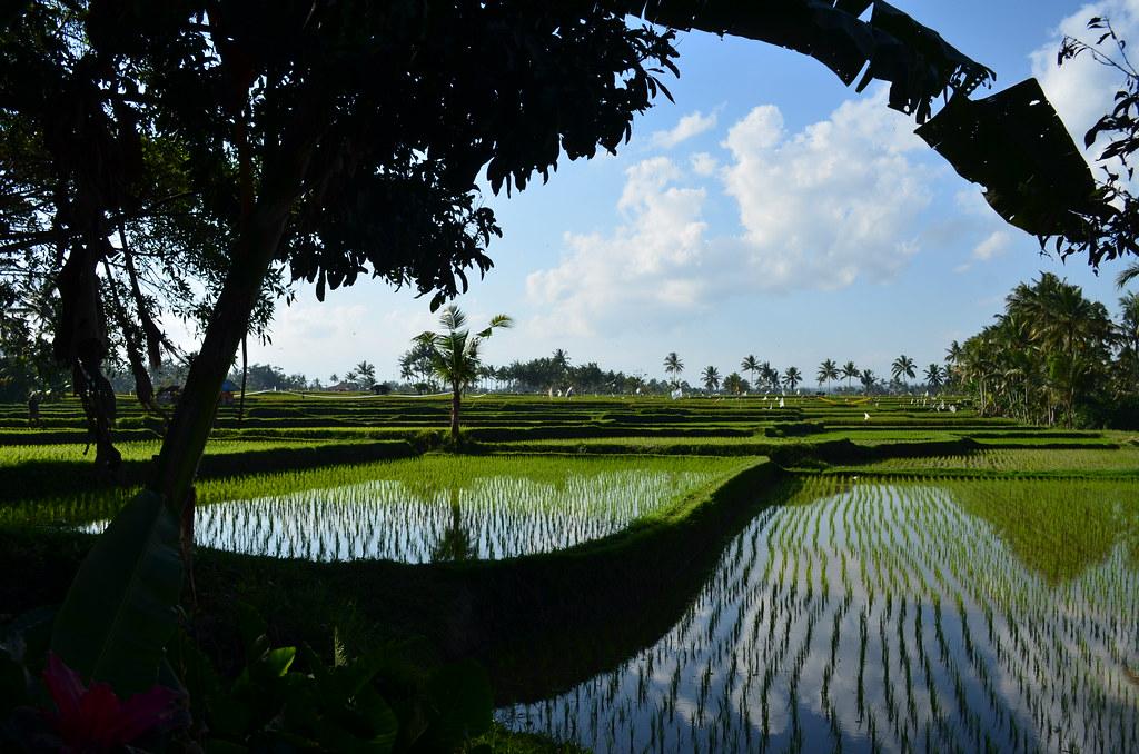 Ubud Bali (5)