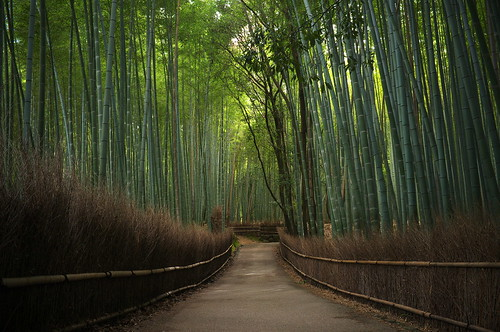the path of bamboo, revisited #14 (near Tenryuu-ji temple, Kyoto)
