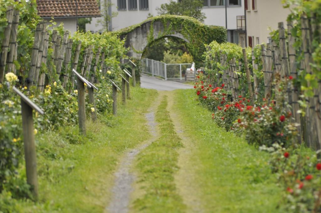 Viñedos en la ciudad de Vaduz Liechtenstein, el pequeño país de los alpes - 6116369363 94c1260824 o - Liechtenstein, el pequeño país de los alpes