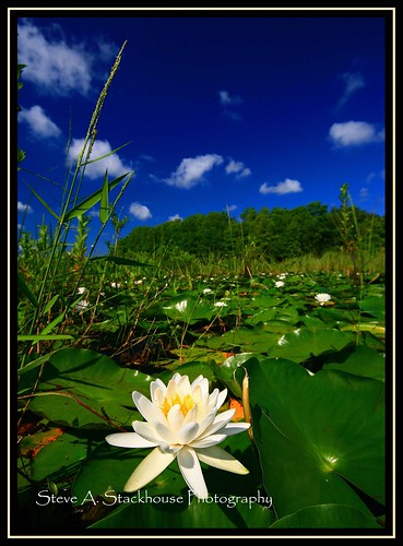 nature water landscape waterlily lily florida fl marsh floralcity
