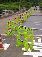 福井の山の中で見つけた蛙たち
