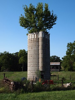Fenced In Tree Silo