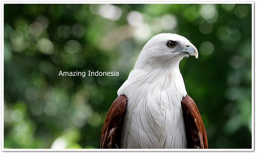 Indonesia Bird 1
