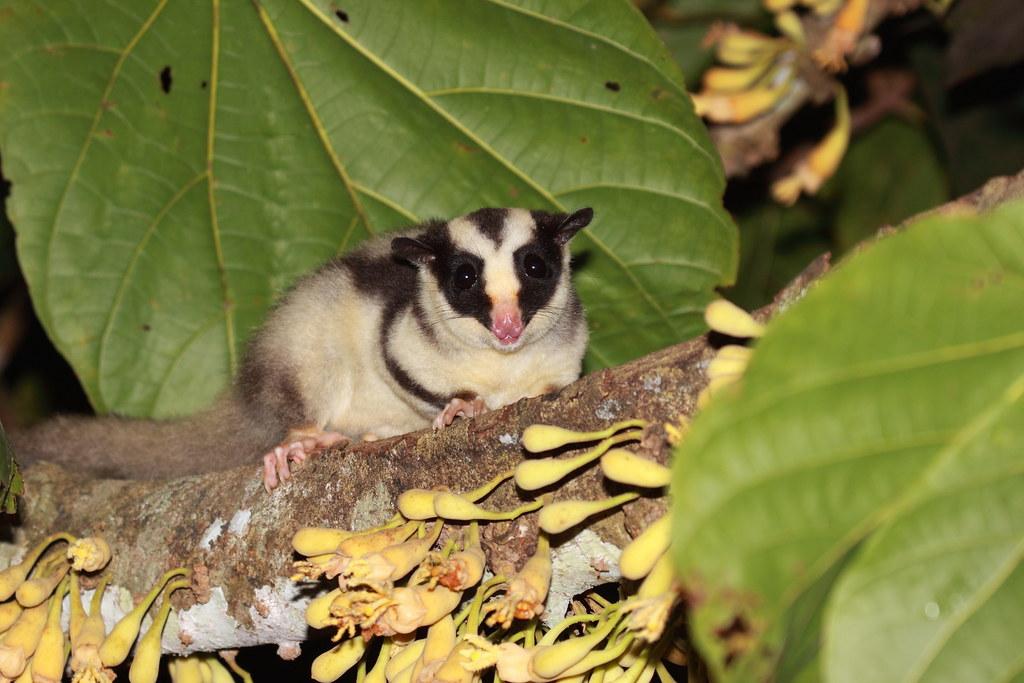 Image result for էկզոտիկ կենդանիների