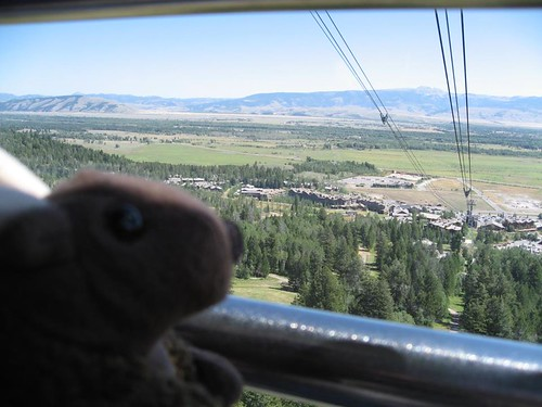 Buddy Bison rides the Teton Village Aerial Tram up to the top of Rendezvous Mountain in the Grand Tetons (WY)