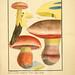 Figures des champignons, servant de supplément aux planches de Bulliard