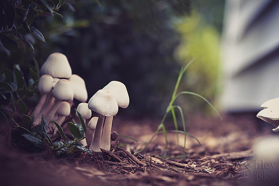 Mushroom Fairy Village