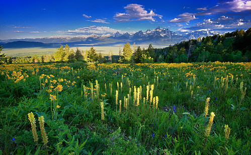 Mountain Of Wildflowers