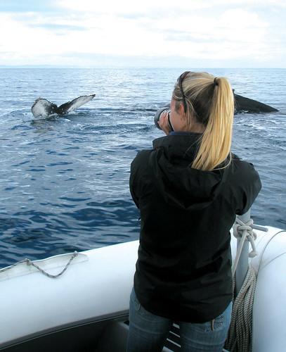 Australia Pacific Whale Foundation