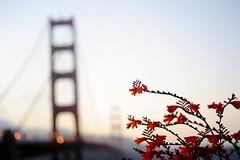 Flower Gate Bridge