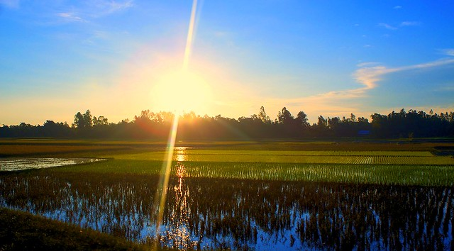Rice paddy fields at Dawn