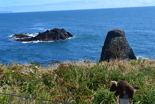 Buddy Bison in Oregon looking into the ocean