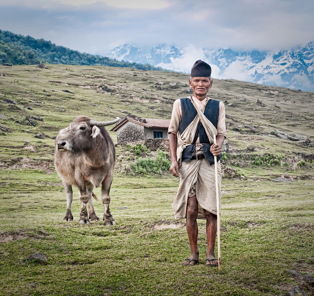 A Nepalese Herder