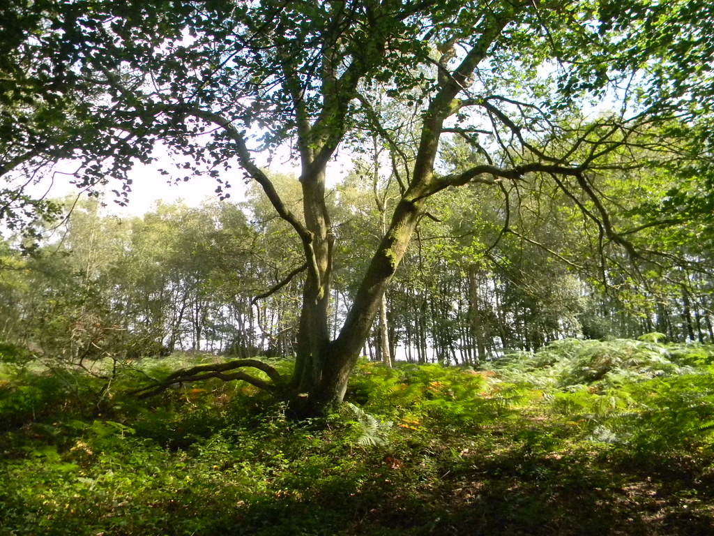 Tree Forest Row Circular