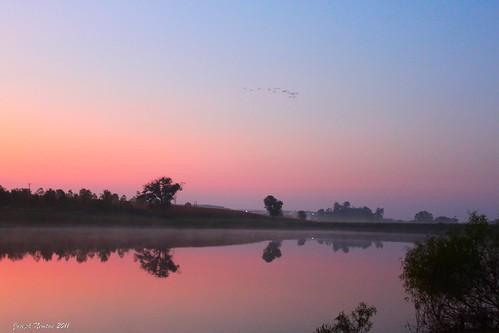 color birds fog sunrise canon reflections dawn glow glassy