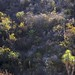 Vegetación con rosetófilos; entre Xolchitepec y San Luis Atolotitlán, Puebla, Mexico por Lon&Queta