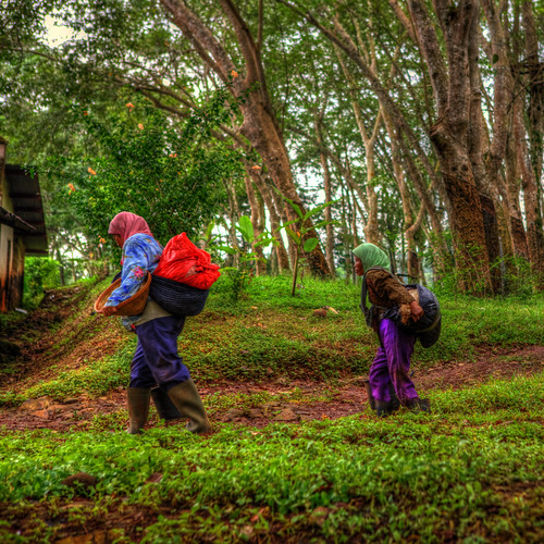 Women working in an Indonesian rubber plantation, Java