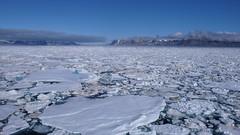 Morze Grenlandzkie pak lodowy