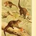 The royal natural history. v2. sect.3