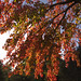 """""""Fall"""" in Love with Naz - Nazareth College, Rochester, NY"""
