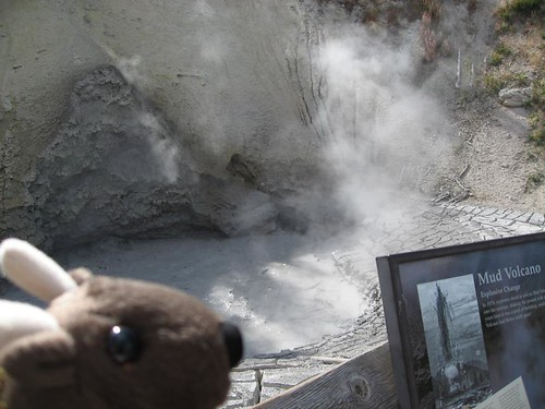 Buddy Bison at Mud Volcano in Yellowstone National Park