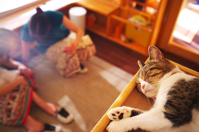 let the sunshine in (at a cat cafe, Nara)