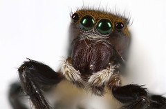 """""""My, what big eyes you have!"""" by Gemma Stiles"""