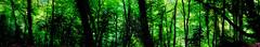 Woodland Dream - Symonds Yat, Wye Walley. By Thomas Tolkien