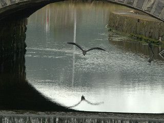 HERON UNDER THE BRIDGE