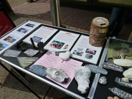 柏令海峽展示點,告訴人們海崖/海裡發現過什麼化石、有什麼遺跡